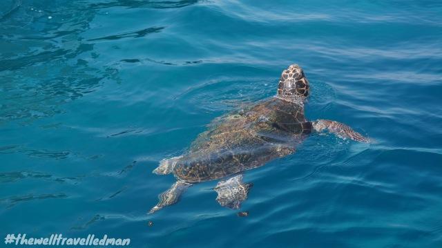 thewelltravelledman zakynthos turtle watching cruisemar
