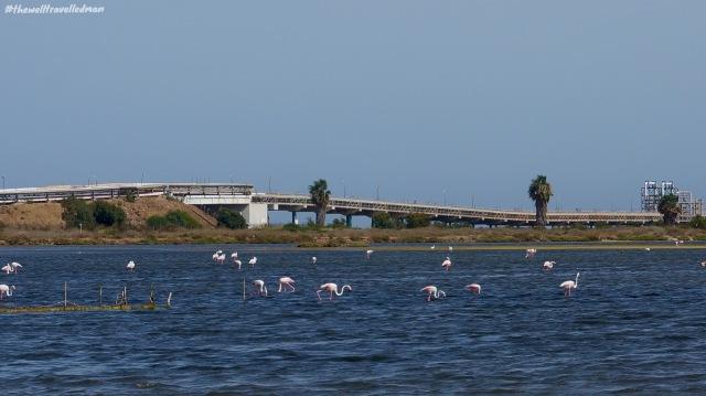 thewelltravelledman sardinia flamingos