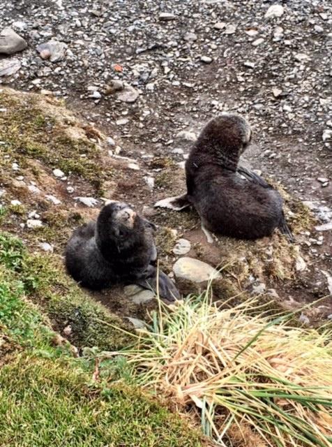 Baby seals looking cute
