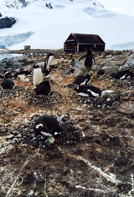 Penguin colony and Chilean base boat house at Waterboat Point