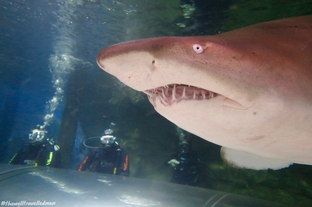 thewelltravelledman manly sea life shark dive xtreme